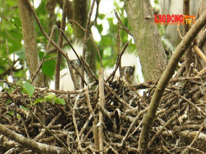 Cặp vợ chồng dành hơn 2 ha đất trồng cây làm nơi trú ngụ cho cò