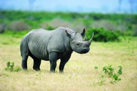 """Động vật sẽ """"thu nhỏ"""" để đối phó với biến đổi khí hậu"""