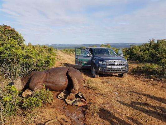 Volkswagen tiếp tục hỗ trợ chống săn trộm tê giác Nam Phi