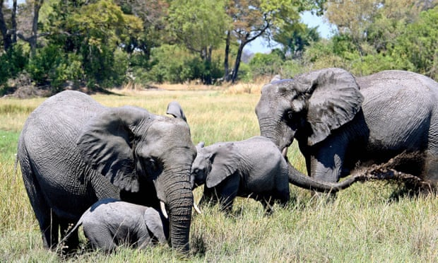 Botswana bị lên án vì dỡ bỏ lệnh cấm săn voi