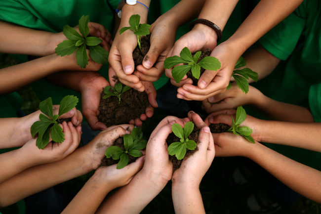 Philippines quy định học sinh, sinh viên phải trồng cây mới được tốt nghiệp