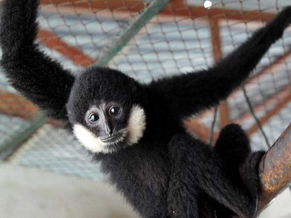 Săn bắt, buôn bán động vật hoang dã – Bài 1: Tác động xấu đến đa dạng sinh học