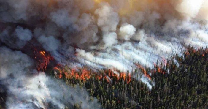 Cháy rừng ở Alberta, Canada: Hàng chục nghìn người phải sơ tán