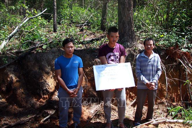 Bắt được kẻ cầm đầu phá hơn 10 ha rừng thông ở Lâm Đồng