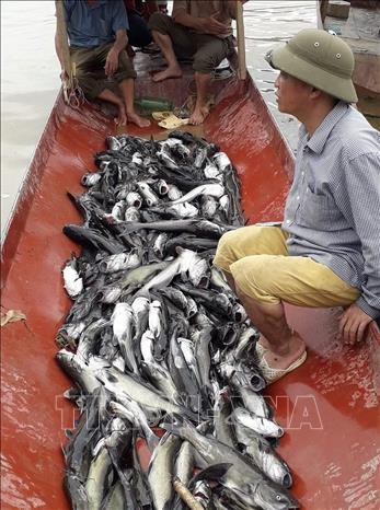 Cá lồng chết hàng loạt trên lòng hồ thủy điện Sơn La