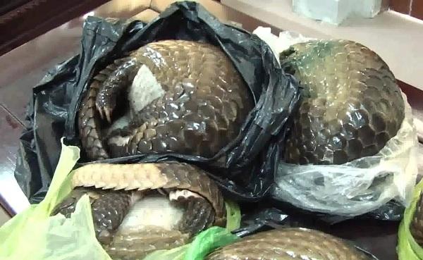 Nghệ An: Bắt vụ vận chuyển 7 cá thể tê tê