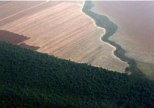 Rừng Amazon bị tàn phá: Khi chính trị đi ngược lợi ích môi trường