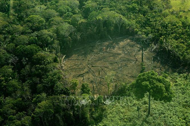 """Phá rừng Amazon đang ở mức """"siêu tốc"""""""