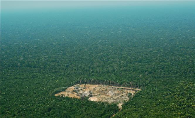 Brazil rải 165 đặc vụ khoanh vùng lâm tặc tàn phá Amazon
