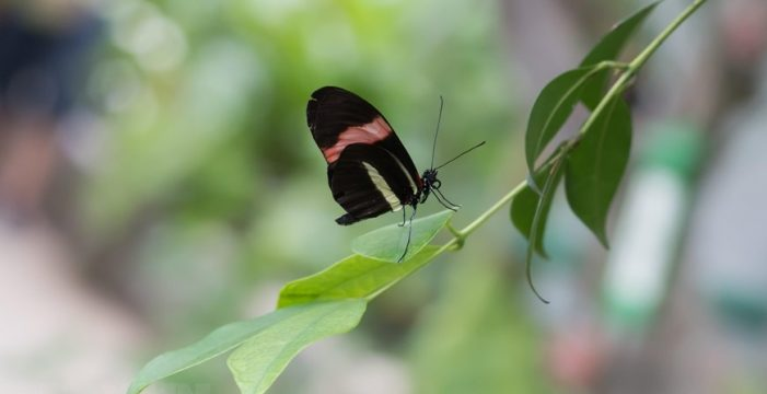 Chiêm ngưỡng 21 loài bướm nhiệt đới đẹp mắt tại Hungary