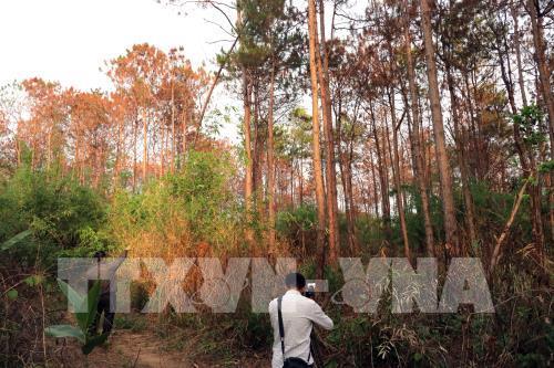 Phạt 15 triệu đồng đối tượng hạ độc cây thông rừng để chiếm đất sản xuất