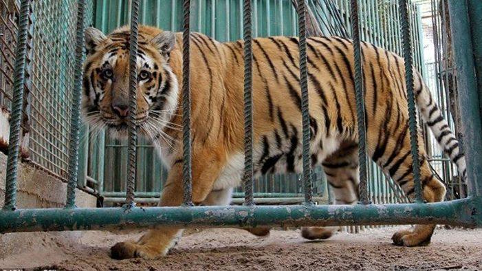 Chuyện buồn sau tour du lịch ngắm động vật hoang dã