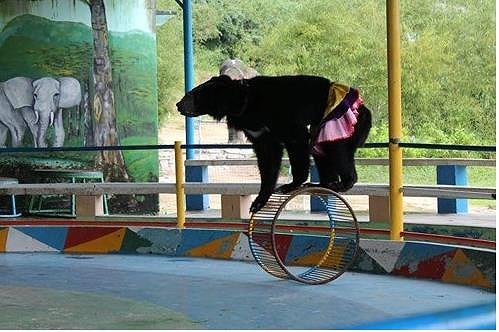 Công viên Đầm Sen sử dụng động vật hoang dã diễn xiếc?