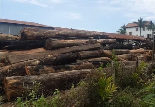 """Nhiều kiểm lâm, bảo vệ rừng bảo kê trùm gỗ lậu Phượng """"râu"""""""