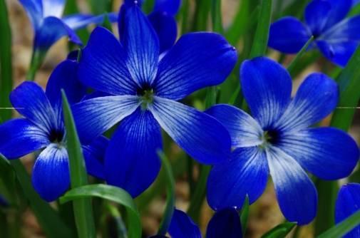 571 loài thực vật đã biến mất hoàn toàn khỏi trái đất