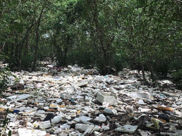 """Rừng ngập mặn """"kêu cứu"""" trước lượng rác khổng lồ đổ về Hải Phòng"""