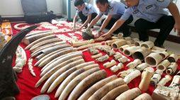 Tòa án Thái Lan bác vụ án buôn lậu sừng tê giác