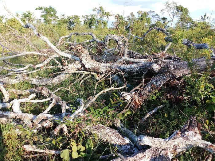 Gia Lai: Ban Quản lý Rừng phòng hộ Đức Cơ để mất hơn 9.000ha rừng