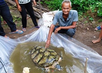 Thả cá thể rùa nặng 34kg ra biển
