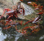 Đề xuất ban hành quy trình quản lý sinh vật ngoại lai xâm hại
