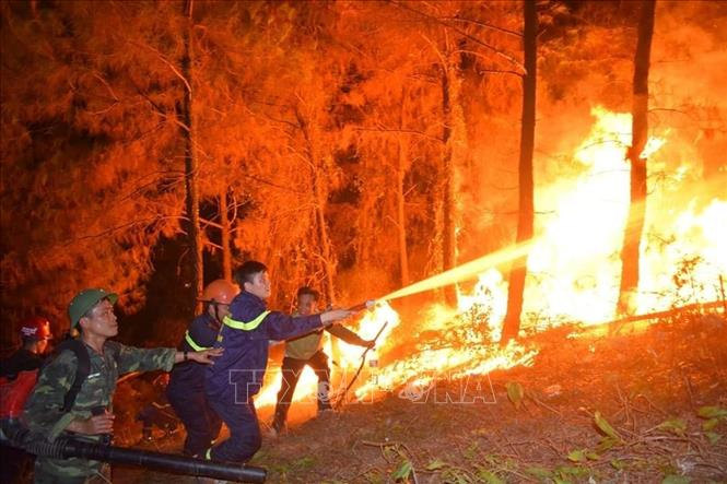 Khởi tố, bắt tạm giam đối tượng liên quan đến vụ cháy rừng ở Hà Tĩnh