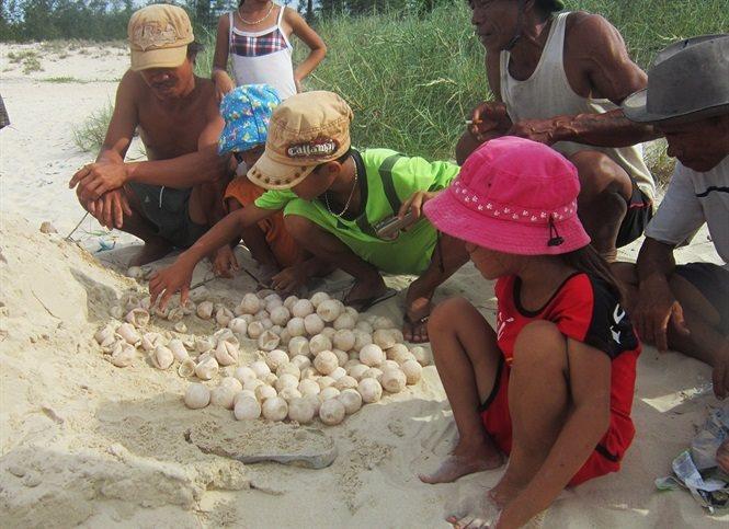 Bảo tồn rùa quý hiếm ở biển đảo Cồn Cỏ