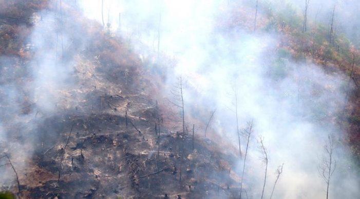 Cận cảnh nơi cháy rừng lớn, người tử vong