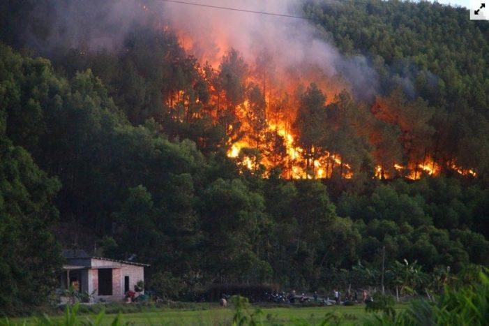 Còn biệt phủ, resort xâm chiếm, còn nguy cơ cháy rừng
