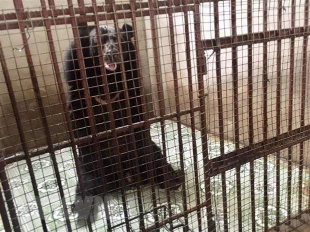 Cứu hộ nhiều cá thể động vật hoang dã nhờ thông tin từ đường dây nóng