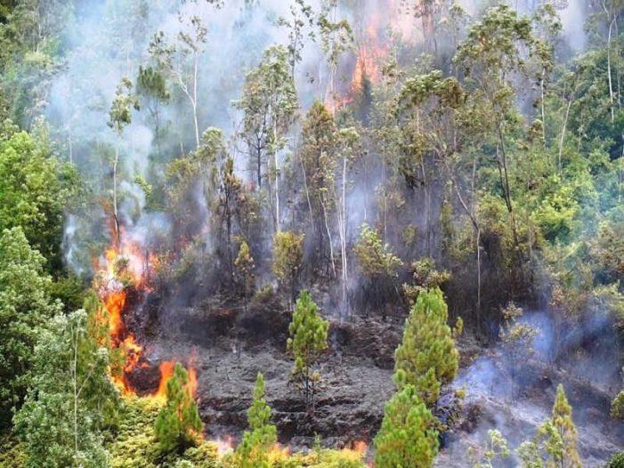 Đà Nẵng: Rừng tự nhiên cháy, dập lửa khó vì vướng dây leo