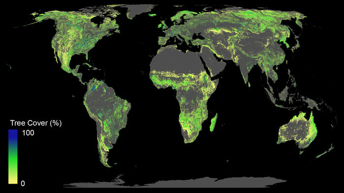 Cần 300 tỉ USD để trồng rừng, kiểm soát nóng lên toàn cầu