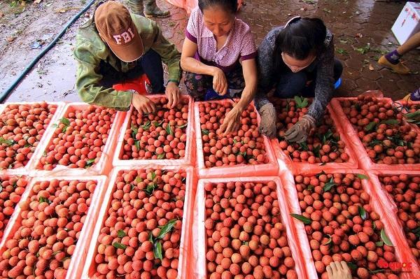 """Nghịch lý sản phẩm nông nghiệp: """"Chuyên nghiệp""""… đàm phán, """"nghiệp dư"""" tiểu ngạch"""