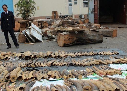 """Khởi tố vụ hơn 7 tấn ngà voi và vảy tê tê """"vô chủ"""" nhập qua Hải Phòng"""