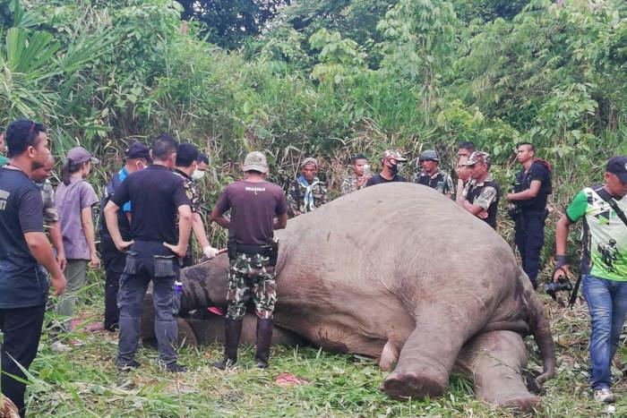 Thái Lan: Một cá thể voi hoang dã bị bắn chết để lấy ngà