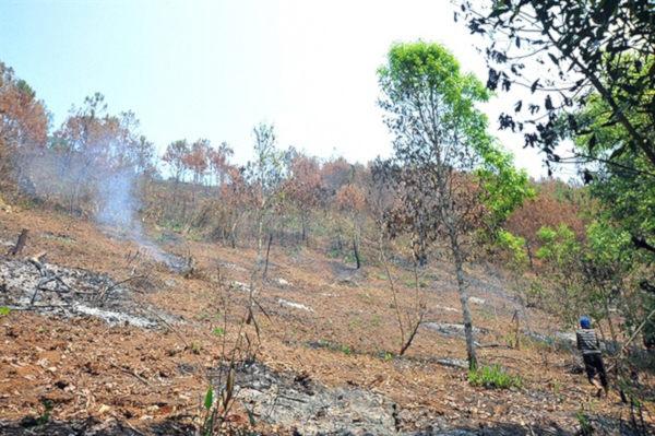 Chỉ đạo xử lý vụ giấu nhẹm 57.400 m2 rừng tự nhiên bị phá
