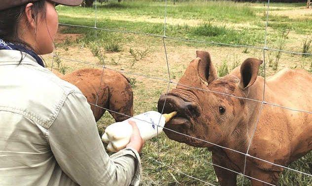 Chiến binh giải cứu tê giác