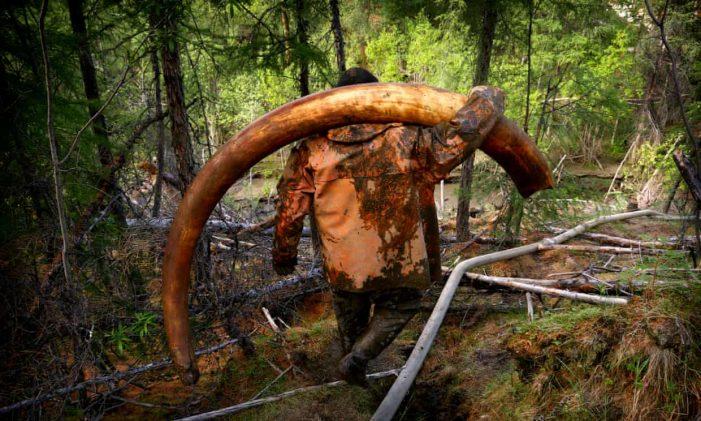 Nga cảnh báo cơn sốt tìm kiếm ngà voi ma mút