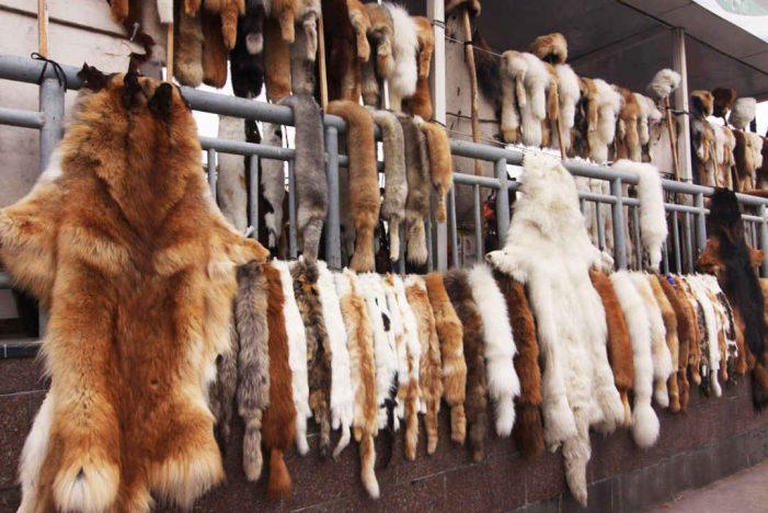 Đấu tranh với vi phạm quy định về bảo vệ động vật hoang dã: Đe dọa an ninh môi trường
