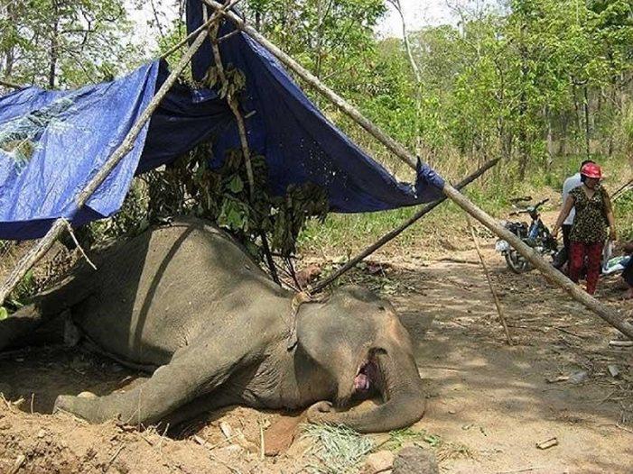 Du lịch cưỡi voi, hãy dừng ngay khi còn kịp!