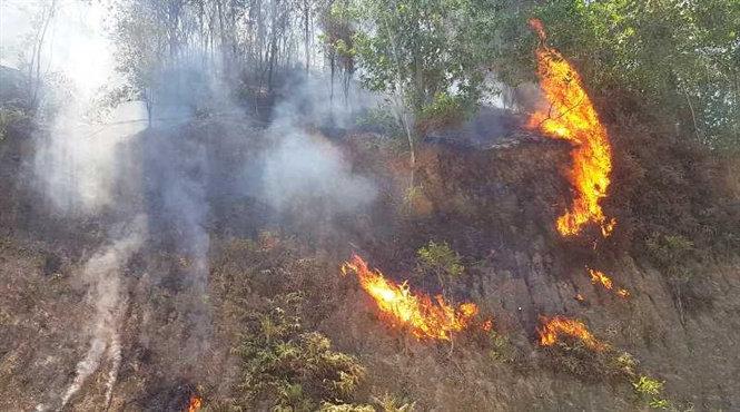 7 tháng, cả nước thiệt hại 1.740,5ha rừng