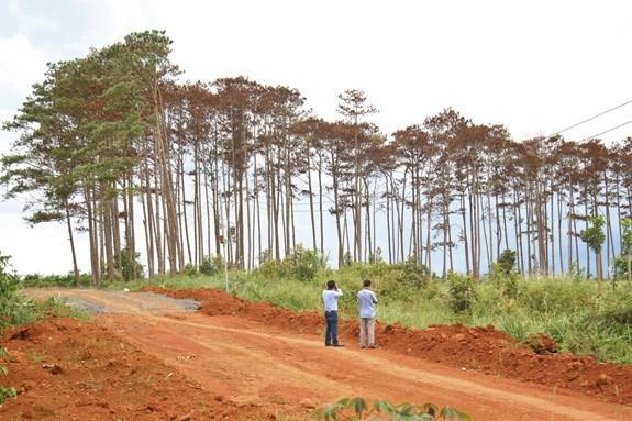 Điều tra thủ phạm vụ hủy hoại rừng ở Lâm Đồng
