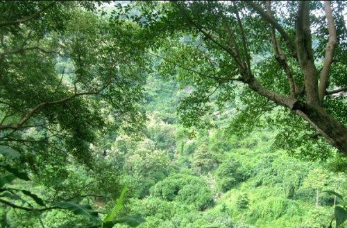 Rừng phía Nam suy giảm cả lượng và chất