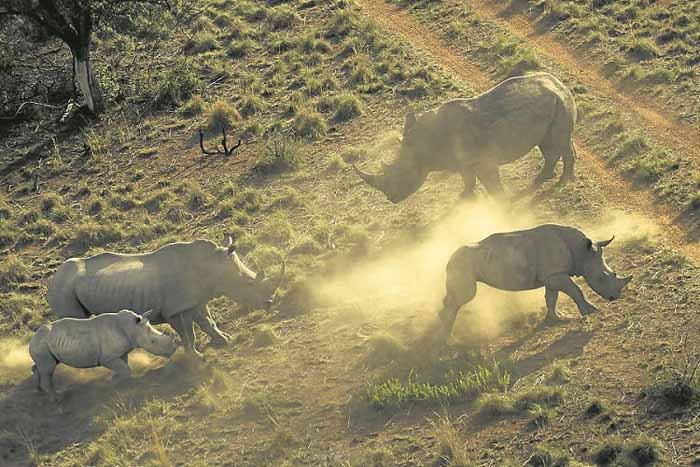 Phát hành trái phiếu bảo tồn tê giác đen