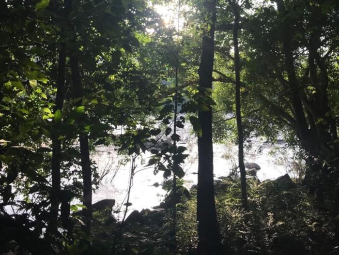 Nhiều chủ rừng nhận tiền dịch vụ môi trường rừng qua tài khoản