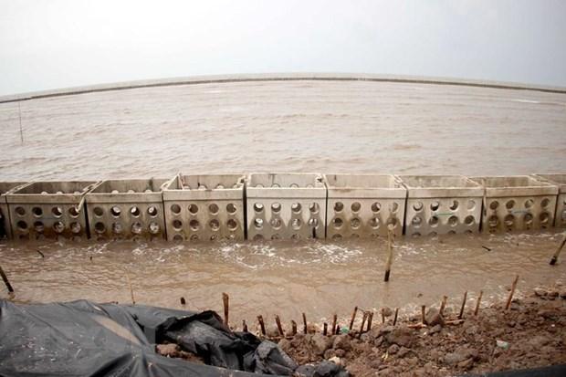 Nước biển dâng cao đột ngột, nguy cơ vỡ đê biển Tây ở Cà Mau
