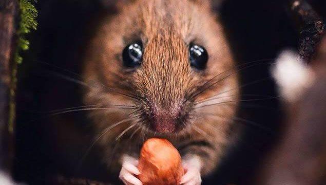 Loạt ảnh thế giới động vật tuyệt đẹp qua ống kính nhiếp ảnh gia Phần Lan