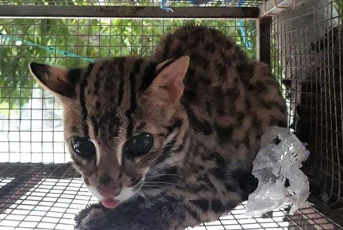 Hơn 140 cá thể động vật hoang dã được giải cứu từ đầu 2019