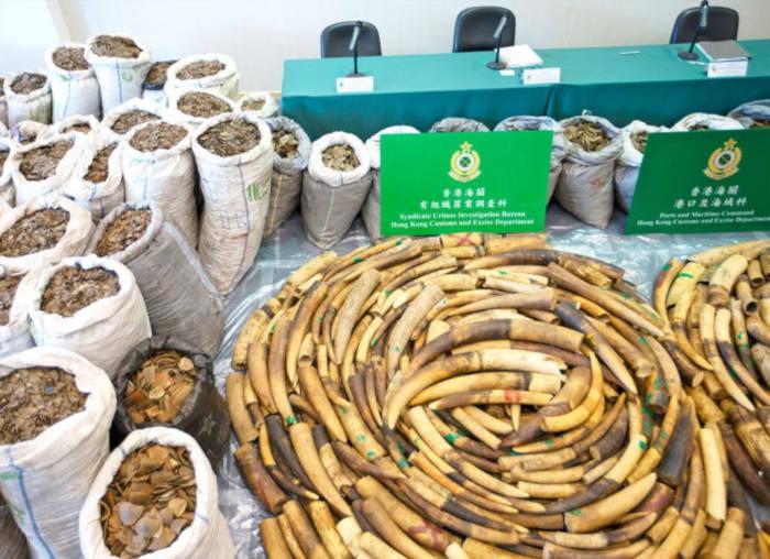 Myanmar thành điểm trung chuyển động vật hoang dã ở ASEAN