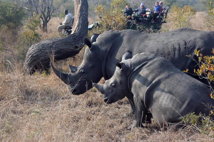 Zambia: Bị kết án hàng chục năm tù vì tội giết tê giác