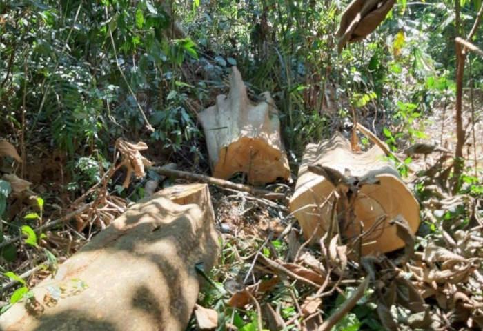 """Quảng Nam: Rừng đầu nguồn Trà Kót bị """"xẻ thịt"""" nghiêm trọng"""